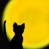 満月をみつめる猫のフリーイラスト