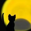 ハロウィン用、黒猫と月食のフリーイラスト