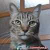 楽天最安値を探せ!猫用 pHコントロール1(2kg)ロイヤルカナが尿道結石症のうちの猫の主食