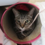 うちの猫は掃除中、ゴミ箱の中へ避難なんだにゃ~(=^・^=)