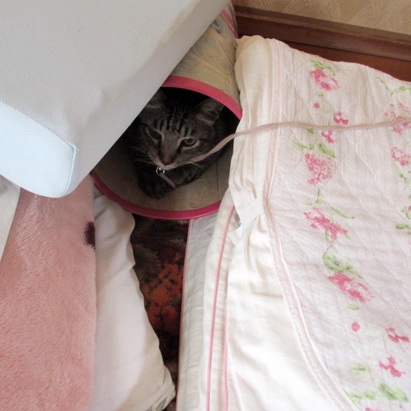 猫の今日の隠れ家2