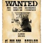 特徴が命!脱走猫、逃走猫、迷い猫に有効な尋ね猫の貼り紙ポスターの作り方