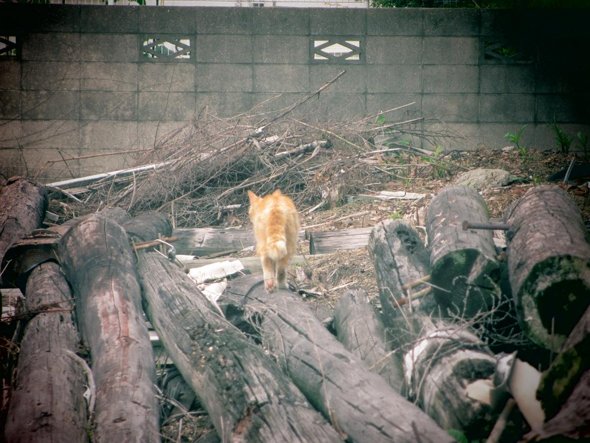 今日の野良猫20150617-04