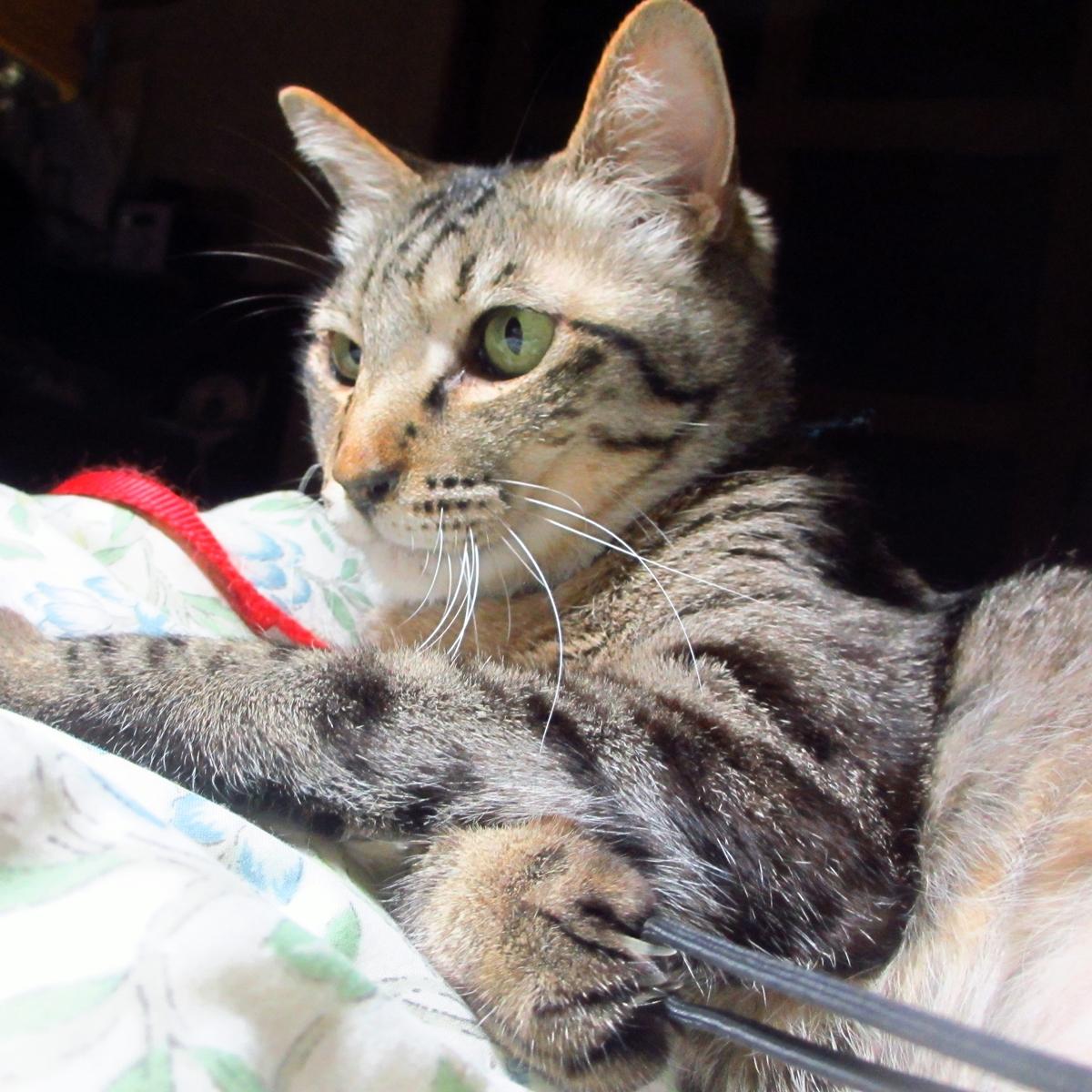 猫の強敵!敵はデジカメの紐-05