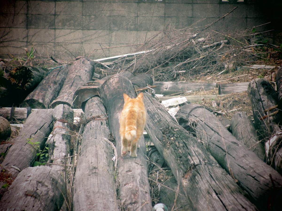 今日の野良猫20150617-03