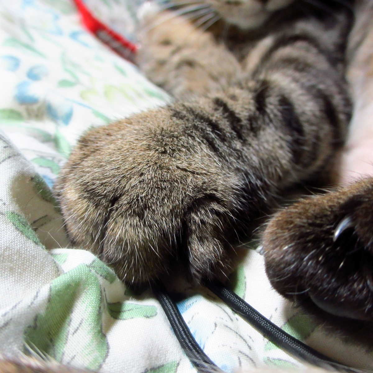 猫の強敵!敵はデジカメの紐-04
