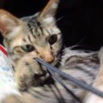 深夜の攻防!デジカメの紐と戦う猫、サヨリ。