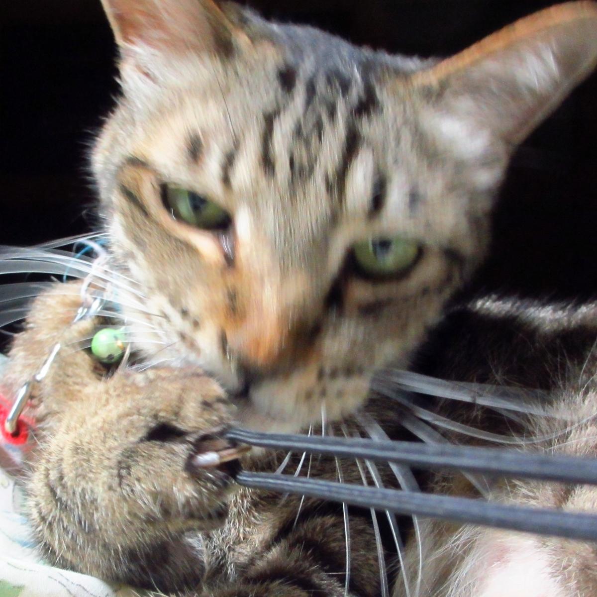 猫の強敵!敵はデジカメの紐-03
