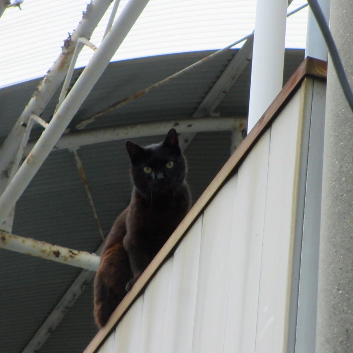 天空からのご指名か?黒猫から呼び止められました20150617-02