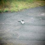 遠路遥々!隣の隣の町で会った野良猫