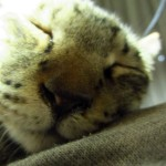寝る、兎に角寝る!サヨリの一日はそんなもんだわぁ。