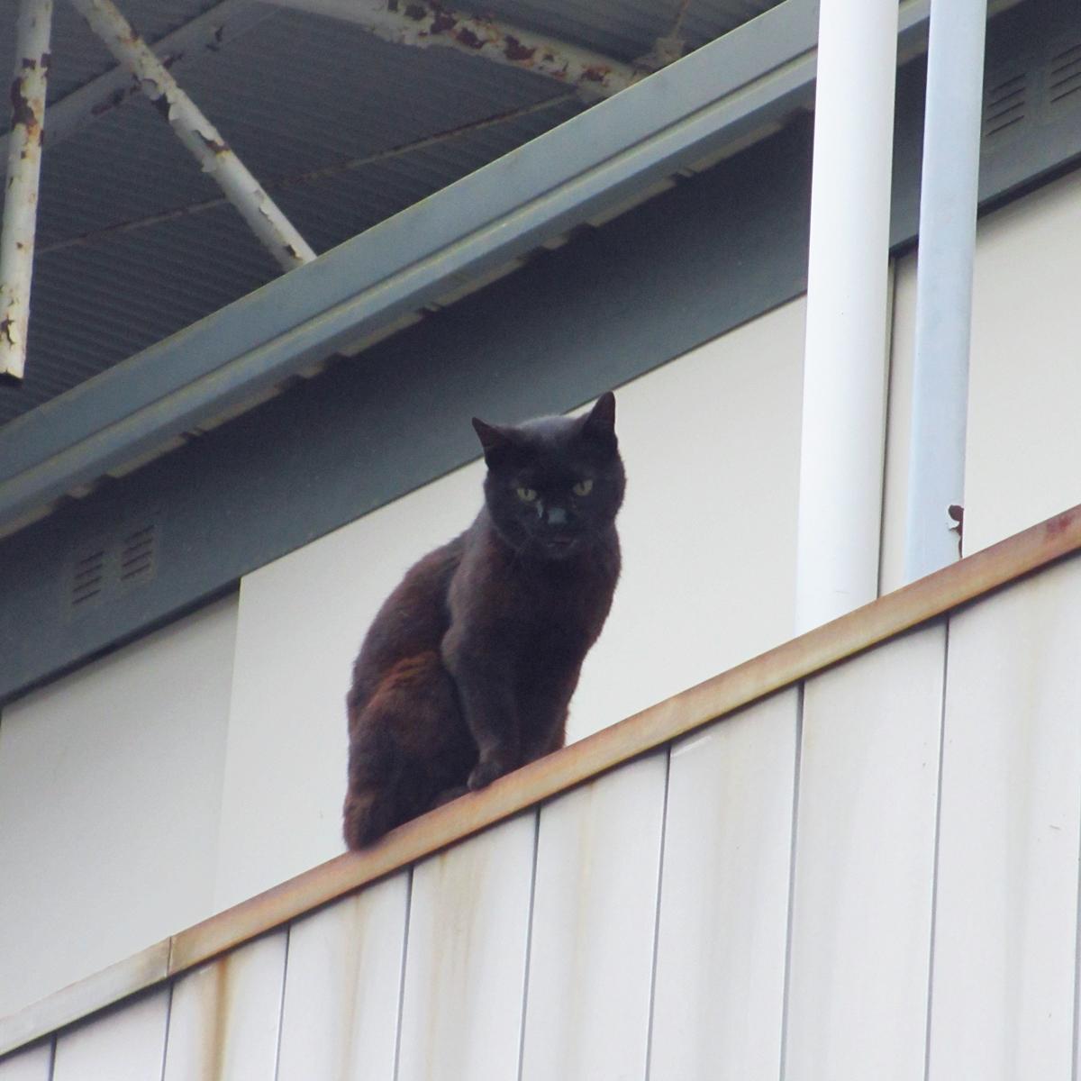 天空からのご指名か?黒猫から呼び止められました20150617-01