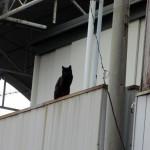黒猫からご指名されたので写真撮影なのです。
