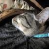 速攻でニャンモナイトへ進化!小さなミカン入れを猫に与えた結果