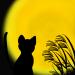 2015年の中秋の名月は9月27日!お月見をする黒猫のフリーイラスト